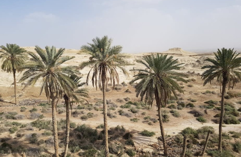 Palm trees in the Jordan Valley where some of the nature reserves are located.  (photo credit: Courtesy)