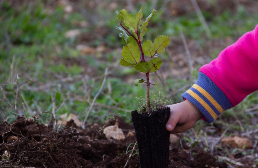 KKL-JNF Child plants tree sapling (photo credit: KKL)