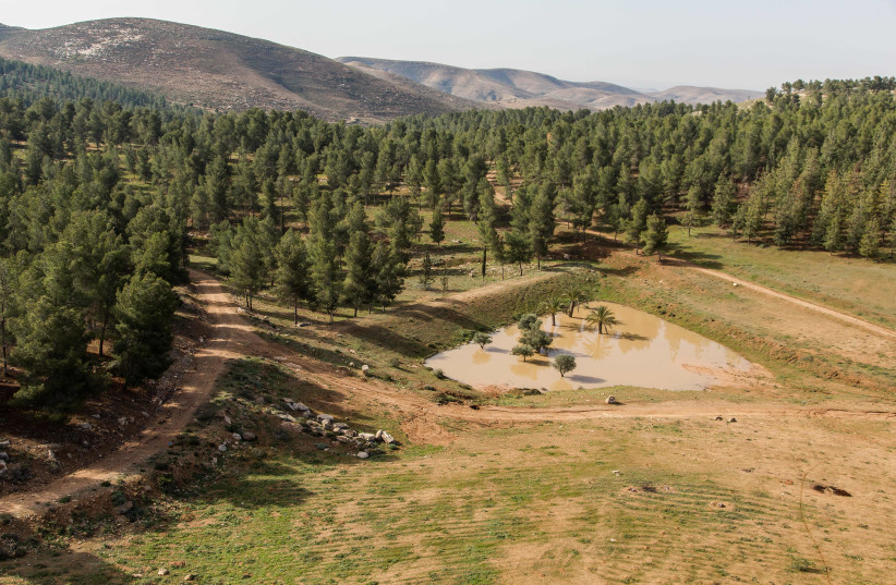 Yatir Forest on the southern slopes of Mount Hebron, on the edge of the Negev Desert (photo credit: JEWISH NATIONAL FUND – USA)