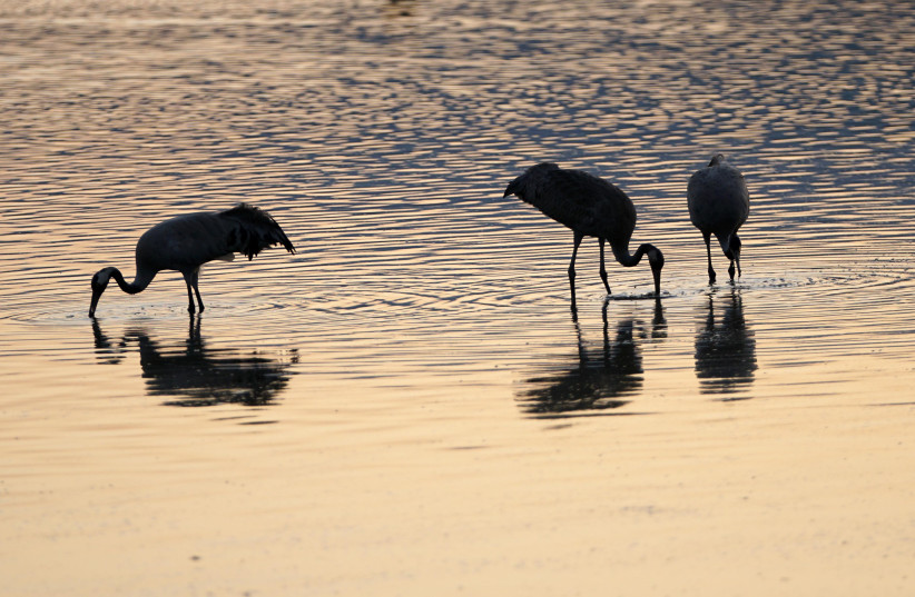 Israel's Hula Valley offers bird watchers an unrivaled experience