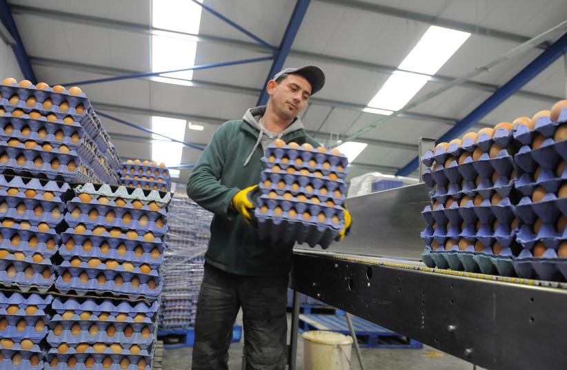 As consumers scramble, Israel targets increased egg supply