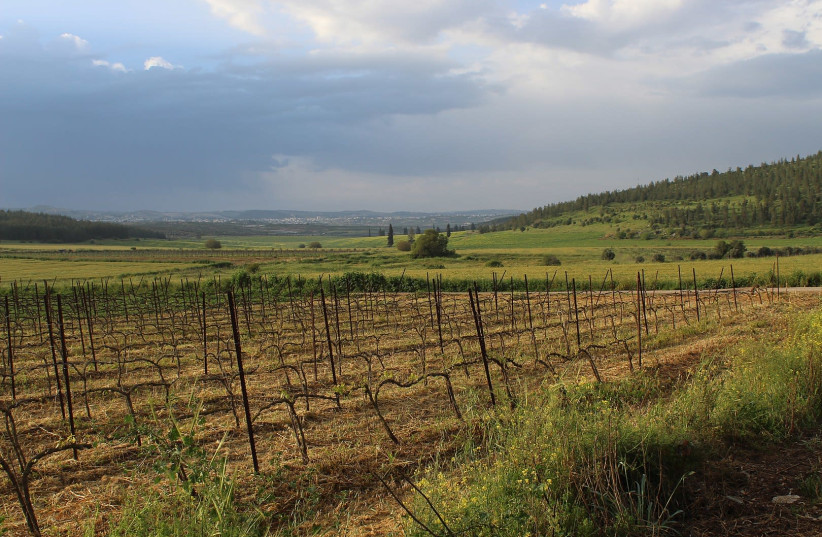 View of vineyard and fields in the largely agricultural district of the Adullam region. (photo credit: DAVIDBENA/WIKIMEDIA COMMONS)