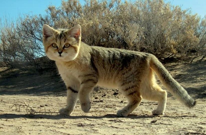 37 meter cat-shaped Nazca line discovered in Peru