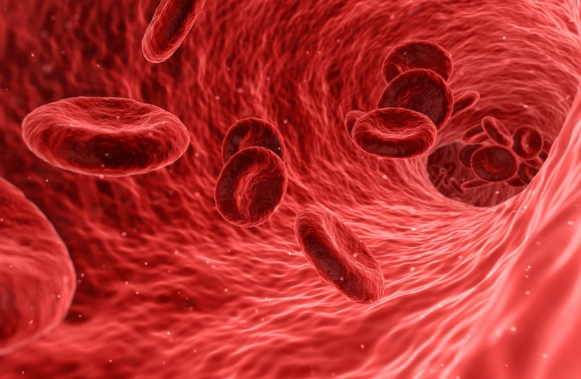 Red blood cells (illustrative) (photo credit: Wikimedia Commons)