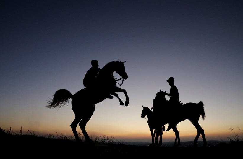 Palestinian teenagers ride their horses during sunset in the East Jerusalem neighbourhood of Shuafat (photo credit: AMMAR AWAD/REUTERS)