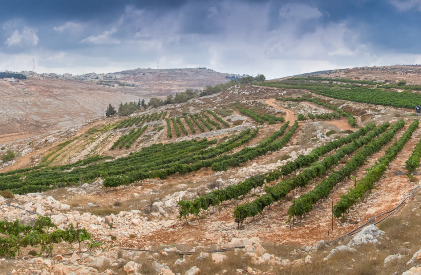 THE HAR Bracha vineyard in the Shomron Hills, one of the areas Harcavi was pleased to help develop (photo credit: HAR BRACHA WINERY)