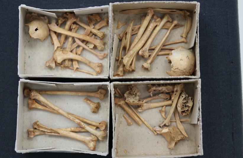 Ancient bird bones. (photo credit: COURTESY OF ABRA SPICIARICH)