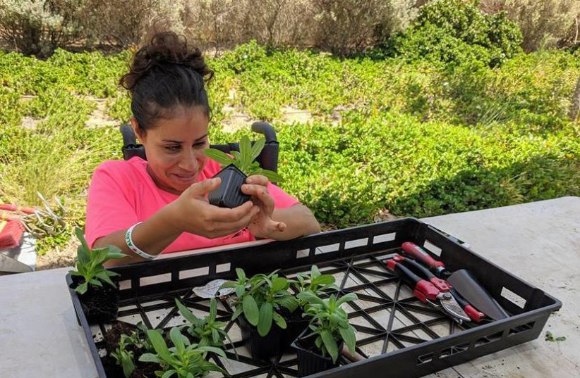 A gardener with special needs prepares flowers for planting at the Rhoda Fischer Memorial Garden at ALEH Negev-Nahalat Eran on July 5, 2020. (photo credit: COURTESY OF ALEH)