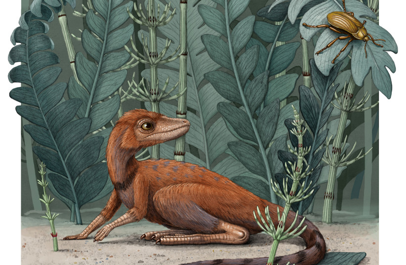 Modest insect-munching Madagascar reptile was forerunner to dinosaurs