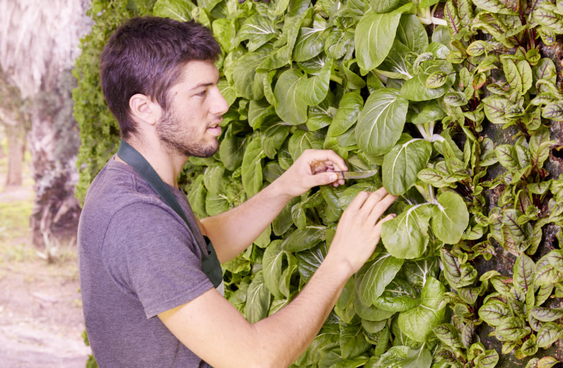 Vertical Agriculture - Fresh greens from the wall straight to the plate