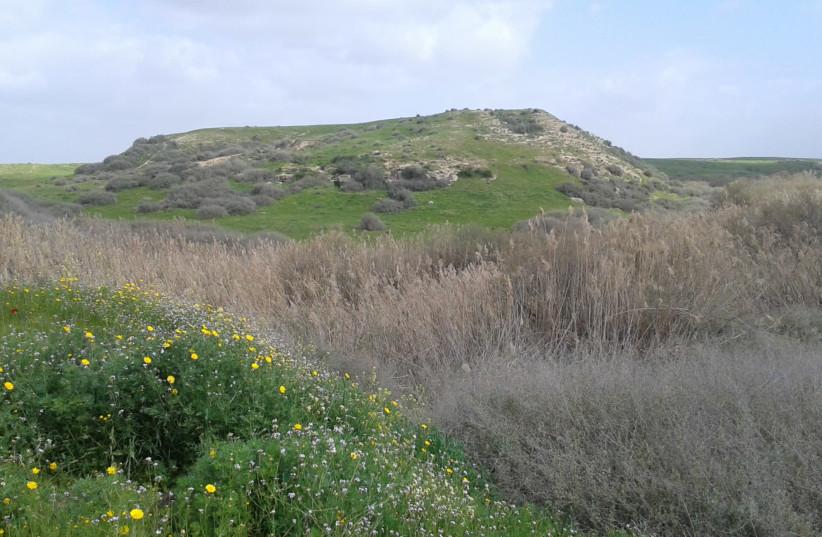 Tel a Sheria (photo credit: DANNY GERSHONI/WIKIMEDIA COMMONS)