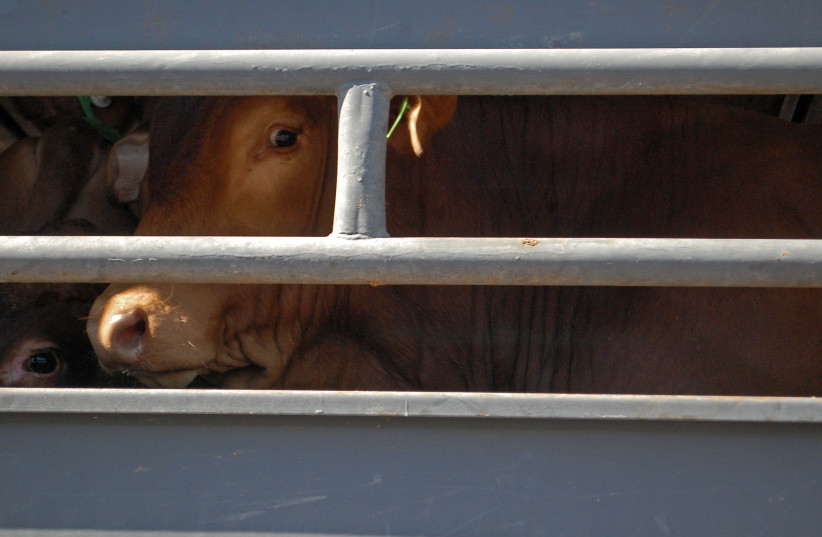 WHO: Live animal exports could spread 'ghastly disease,' must stop