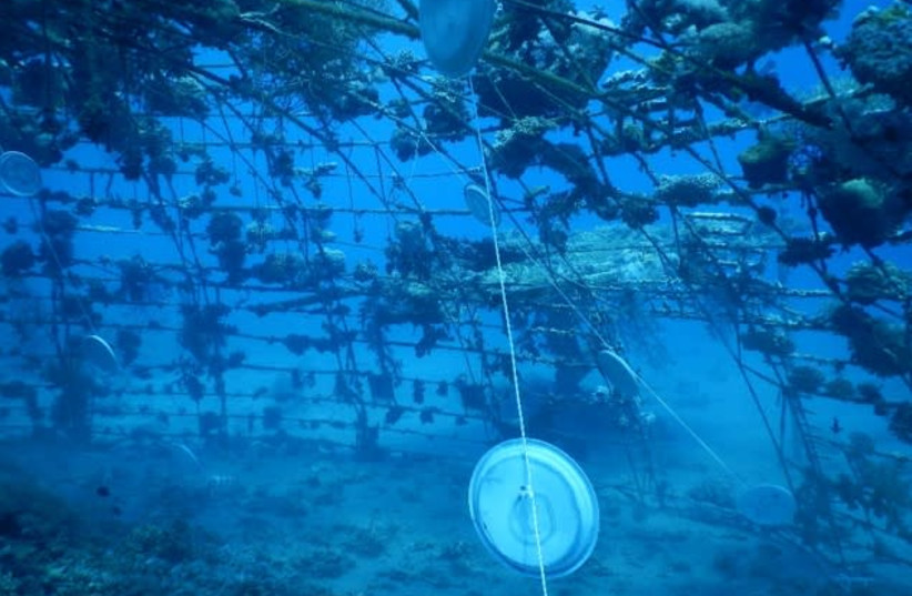 Bioplastic plates hanging underwater in an experiment to test how environmentally friendly they are (photo credit: TEL AVIV UNIVERSITY)