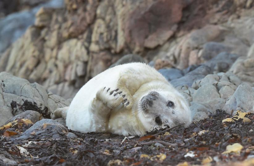 More than 7,000 dead seals found along Namibian beach