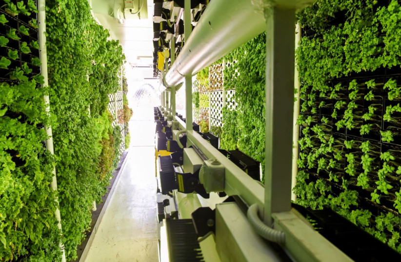 "A Vertical Field ""Urban Farm"" uses BIOLED eco-lighting technology to grow produce for a Rami Levy supermarket in Bnei Brak. (photo credit: VERTICAL FIELD)"