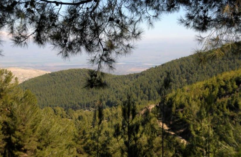 Birya forest (photo credit: WIKIMEDIA)