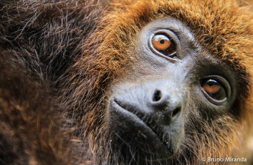 Nine San Diego apes become first non-human primates vaccinated for COVID
