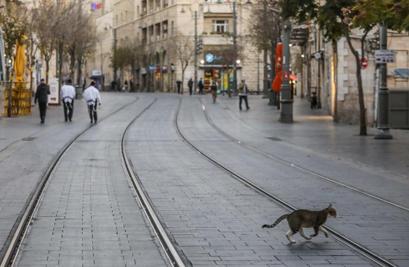 A cat is seen walking across the Jaffa Street light rail tracks in Jerusalem amid the tightened coronavirus lockdown. (photo credit: MARC ISRAEL SELLEM/THE JERUSALEM POST)