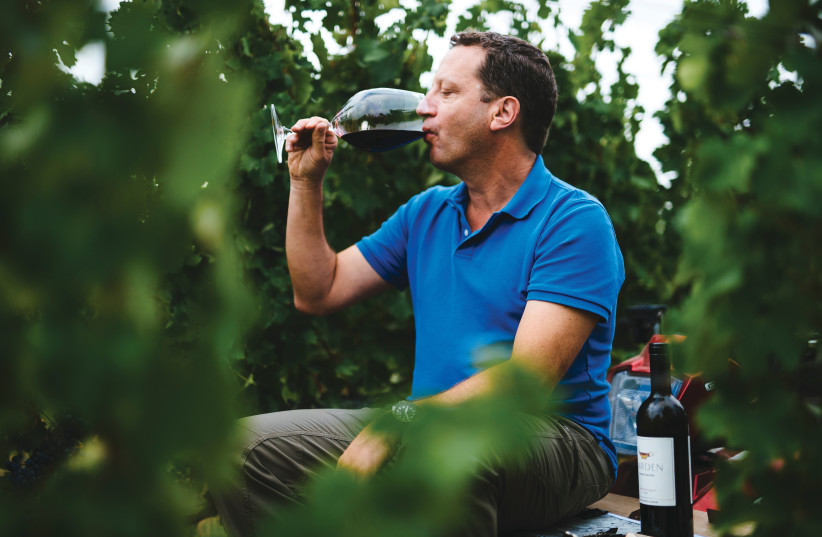 VICTOR SCHOENFELD, head winemaker at Golan Heights Winery, tasting a vintage he made in the vineyard.  (photo credit: GOLAN HEIGHTS WINERY)