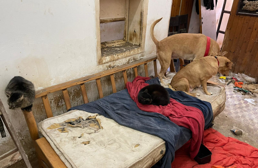 Dogs and cats found in Ramallah apartment (photo credit: POLICE SPOKESPERSON'S UNIT)