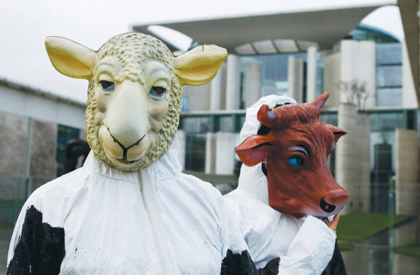 DEMONSTRATORS WEAR a sheep and a cow mask to protest kosher and halal slaughter, at the German Chancellery in Berlin in 2012. (photo credit: THOMAS PETER/REUTERS)