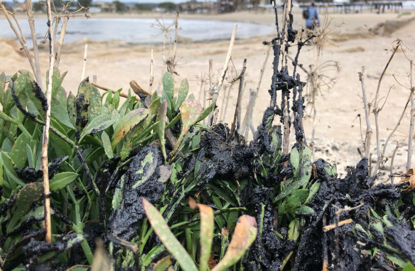Several tons of tar which floated onto Israel's shores from an unknown source have already caused massive damage to local wildlife, and threaten to contaminate the local groundwater. (photo credit: AVSHALOM SASSONI/MAARIV)