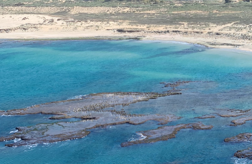 Tar pollution near the shore of Israel  (photo credit: CEO OF THE NATURE AND PARKS AUTHORITY SHAUL GOLDSTEIN)
