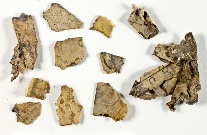 Sections of the Book of the Twelve Minor Prophets scroll discovered in the Judean Desert expedition prior to their conservation. (photo credit: SHAI HALEVI / ISRAEL ANTIQUITIES AUTHORITY)