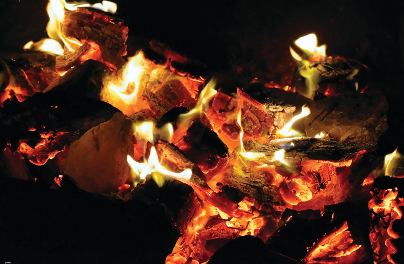 'And he shall cut it into its pieces; and the priest shall lay them, with its head and its suet, in order on the wood that is on the fire which is upon the altar' (Leviticus 1:12). Vayikra, Leviticus 1:1-5:26, is read on March 20. (photo credit: ISRAEL WEISS)