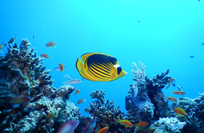 Corals in the Gulf of Aqaba  (photo credit: COURTESY PROF. MAOZ FINE - BAR-ILAN UNIVERSITY)