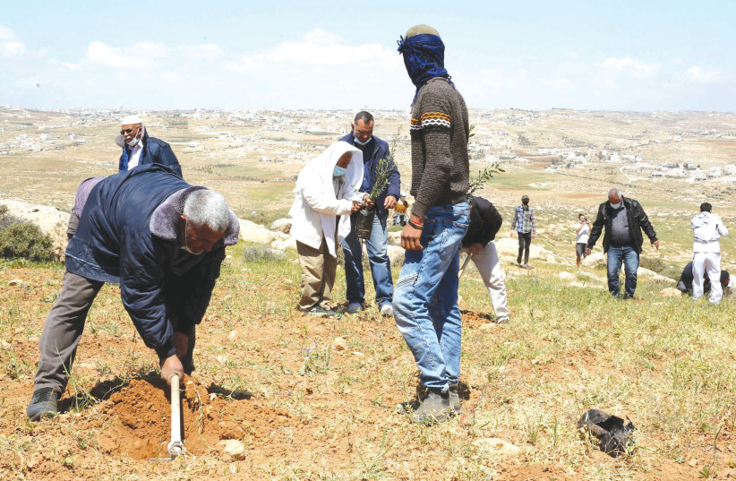 PEACE ACTIVISTS plant trees in protest against Jewish settlements near Yatta, in the West Bank, earlier this month. (photo credit: WISAM HASHLAMOUN/FLASH90)