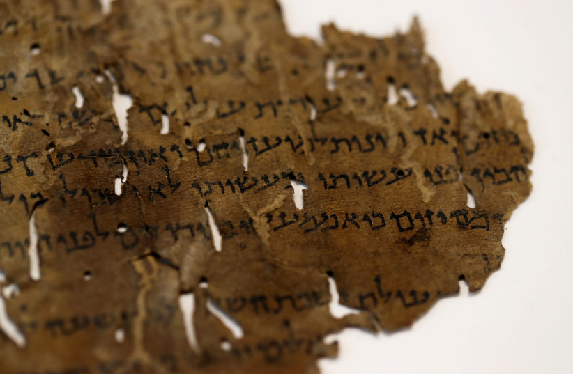 A fragment from the Dead Sea Scrolls that underwent genetic sampling to shed light on the 2,000-year-old biblical trove is shown to Reuters at the Israel Antiquities Authority (IAA) laboratory in Jerusalem June 2, 2020.  (photo credit: REUTERS/RONEN ZEVULUN)