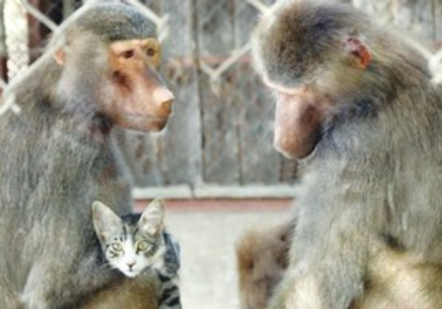 THE BABOON-KITTEN combination didn't work out too