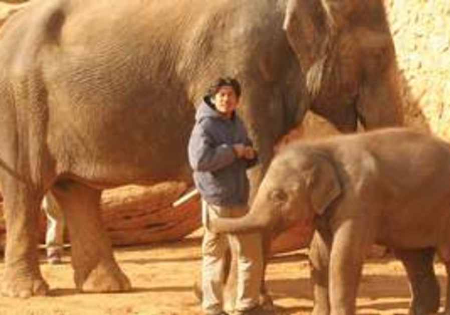 GABY THE ELEPHANT (in front) will join a flock of