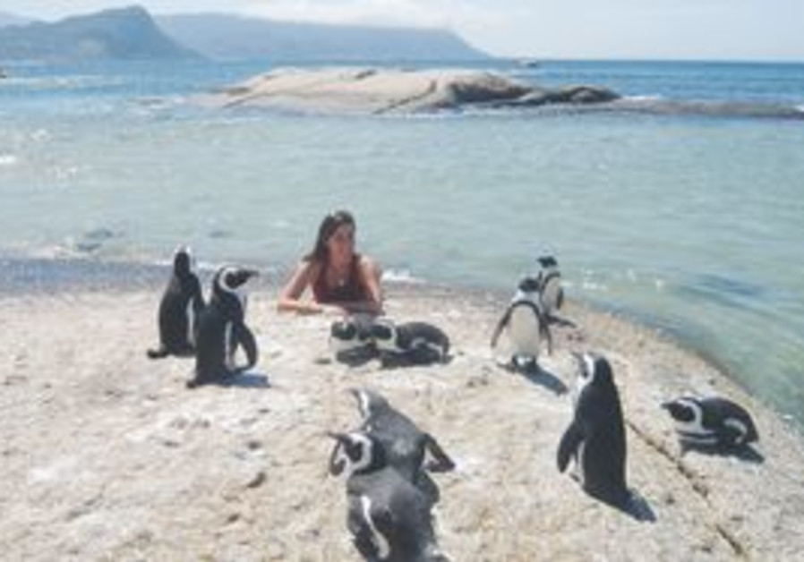 Penguins in Cape Town, South Africa