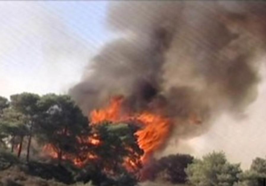 Trees on fire near Usfiya