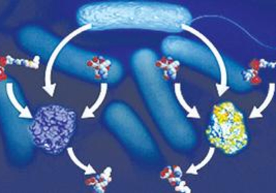 Resistant bacteria