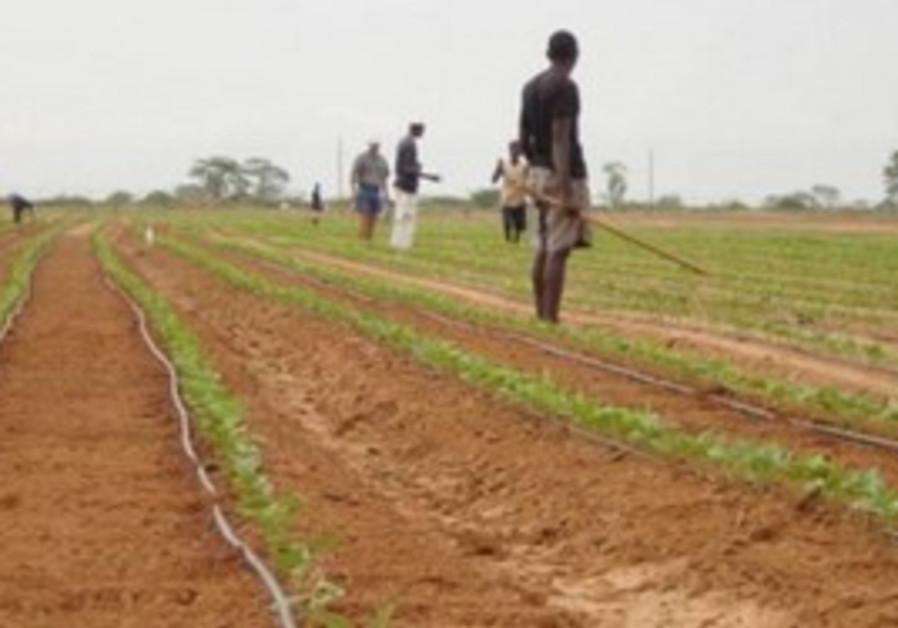 Green 2000 teaches farming.