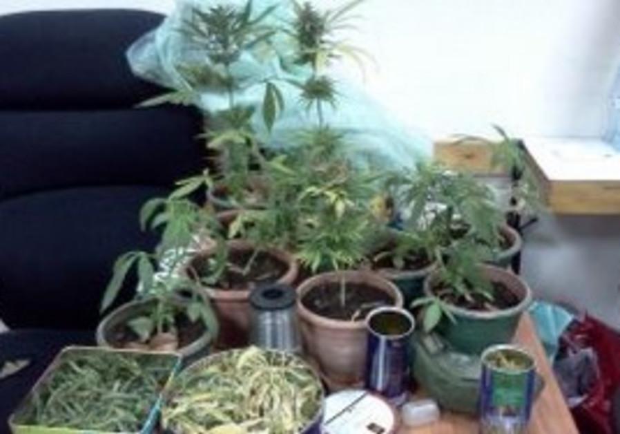 Marijuana seized by the Police.