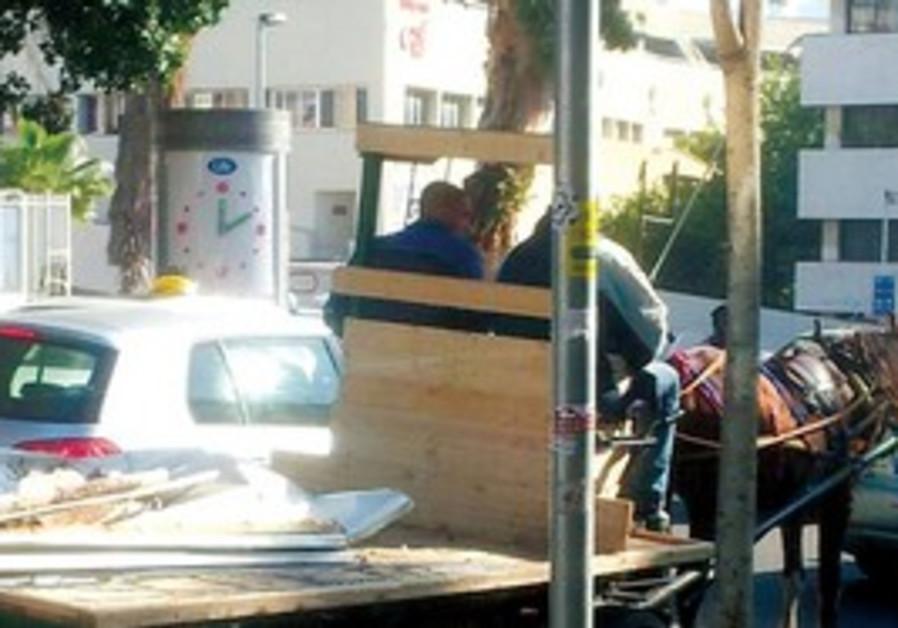 Horse cart, Tel Aviv