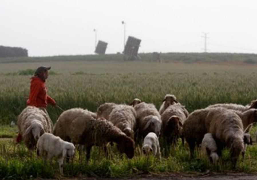 Beduin herds sheep in Negev in front of Iron Dome