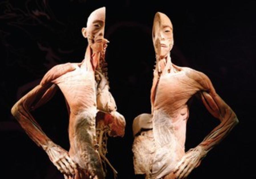 Skeleton in half