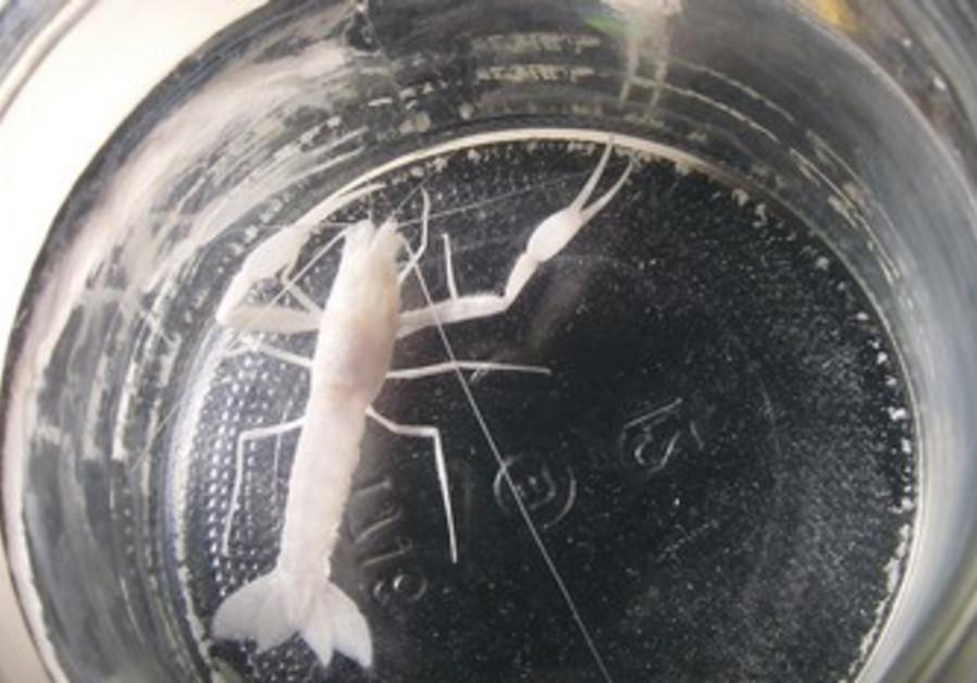Aquatic species found in Ramle.