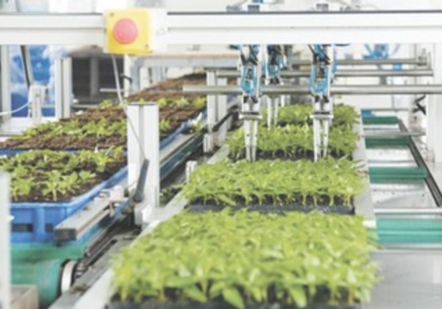 Plants at Hishtil Nurseries