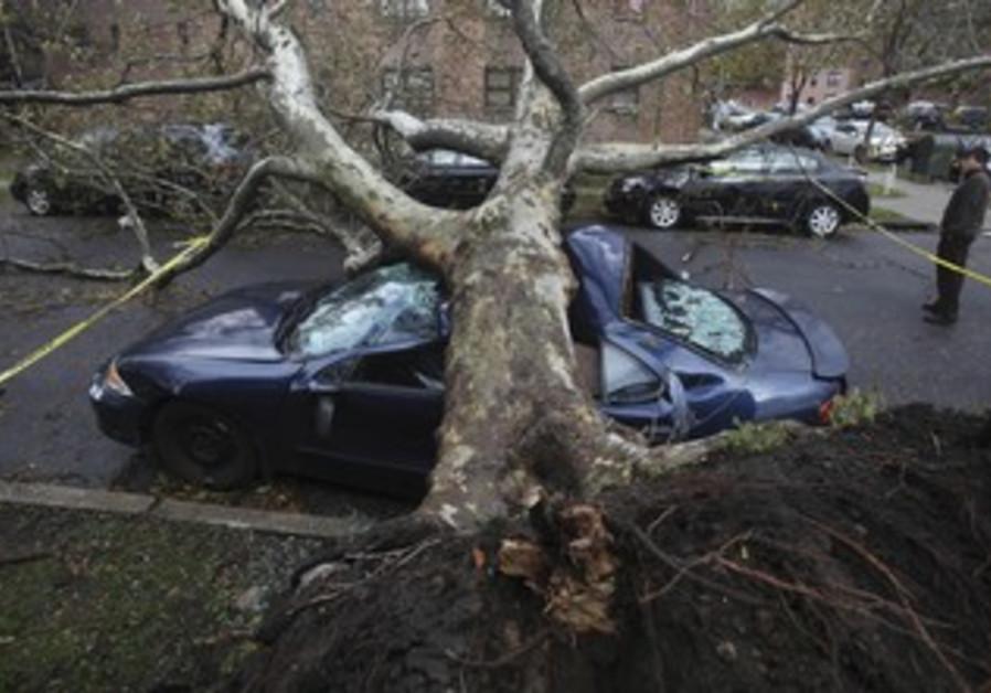 Tree felled by Sandy in NY