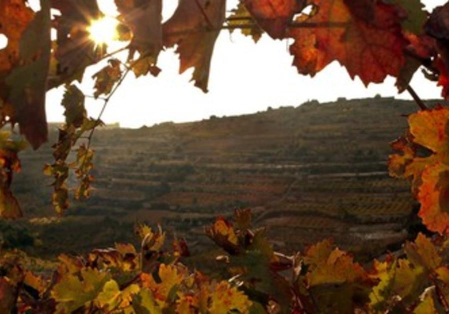 Fall vine arch