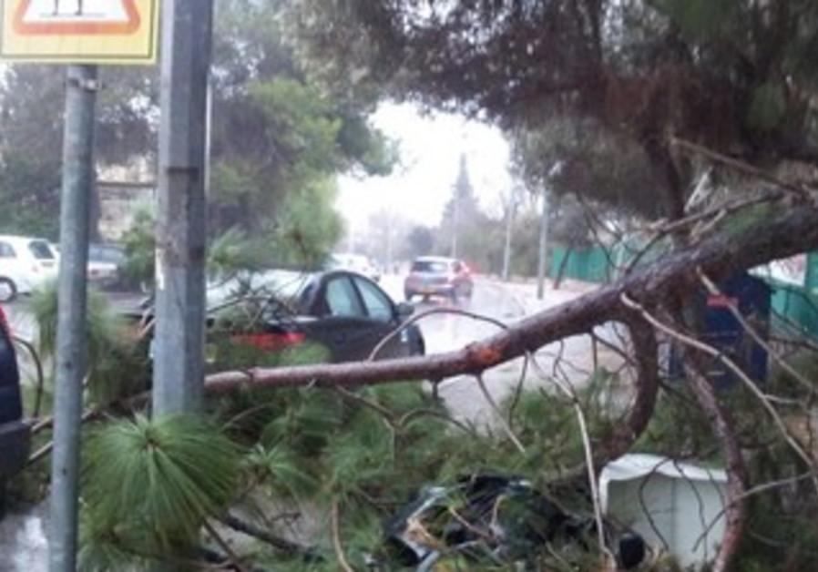 Storm damage in Mevasseret