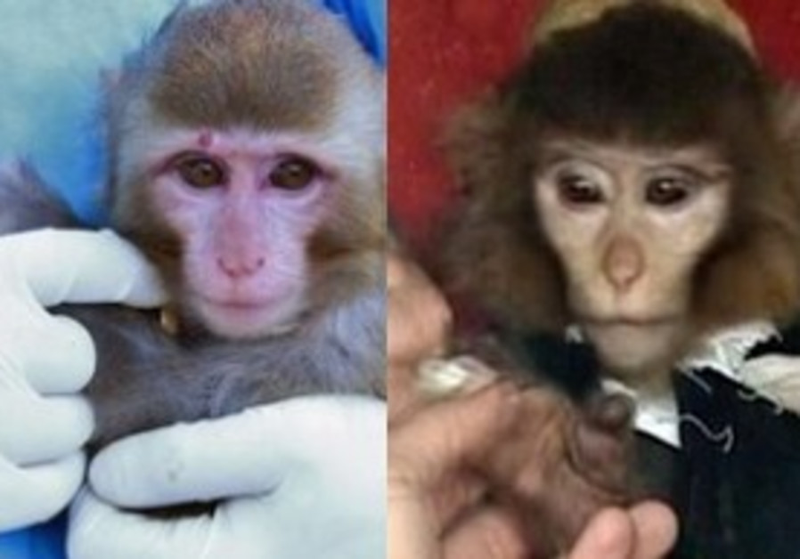 Before (left) and after (right) photos of Iranian monkey(s)
