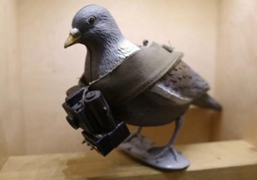 A mock-up of a pigeon with a small camera at the 'Top Secret' Spy Museum in Oberhausen, Germany.