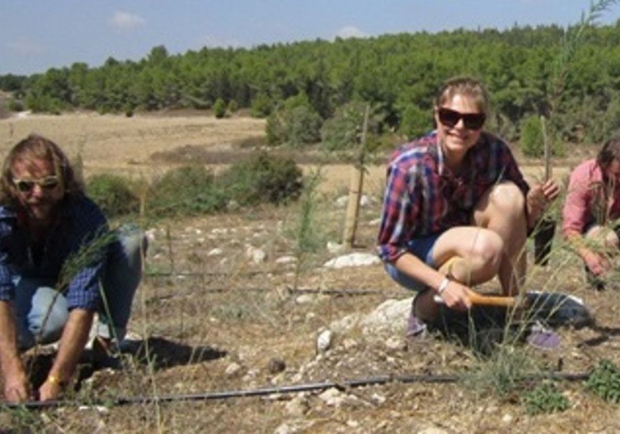 Please the Trees Band Plants Trees in Israel